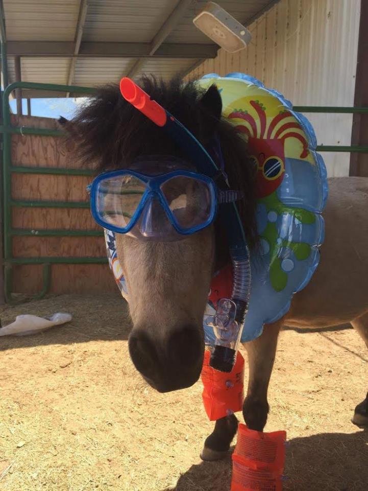 Horse 2016